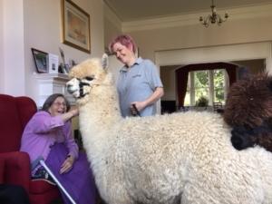 Residents enjoyed the alpacas visit
